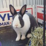 The Rabbit Care Guides: How to Keep a Pet Bunny