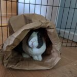 Crate, Cages, and Pens, Oh My! Guide to Rabbit Housing
